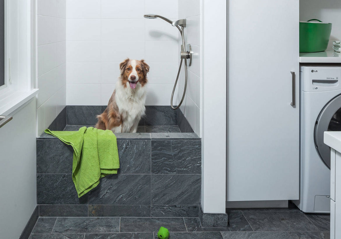 dog shower in laundry